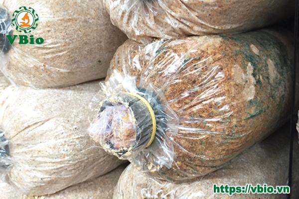 Các bệnh thường gặp trong trồng nấm