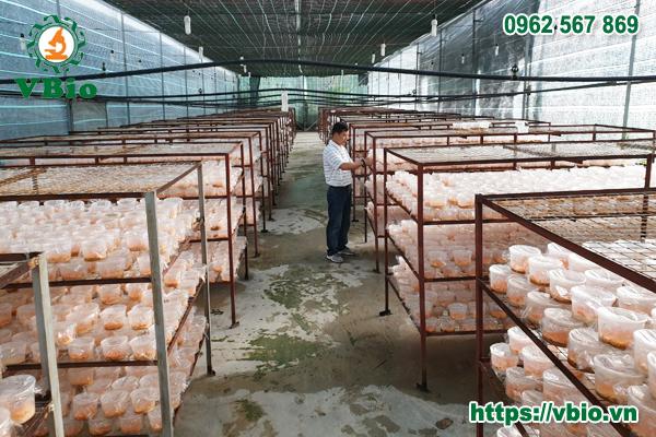Các đơn vị sản xuất nấm quy mô từ nhỏ đến quy mô trang trại