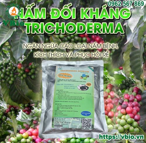 Chế phẩm Nấm đối kháng tricoderma là gì?