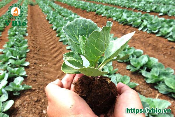 Công dụng của chế phẩm vi sinh vật trong cải tạo đất
