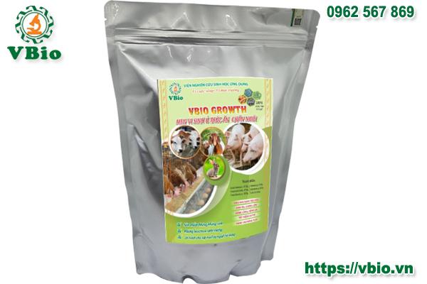 Men ủ thức ăn chăn nuôi